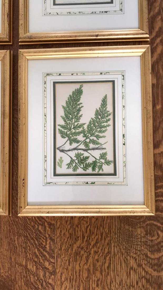 BOTANICAL FERN PRINT GROUPING - 4