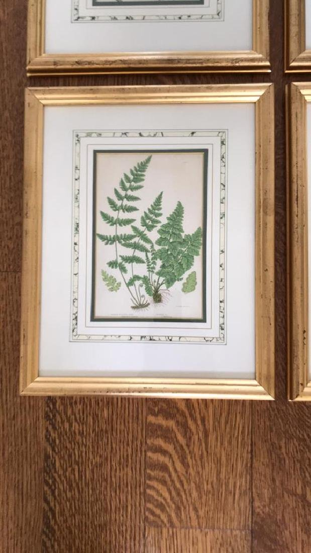 BOTANICAL FERN PRINT GROUPING - 5