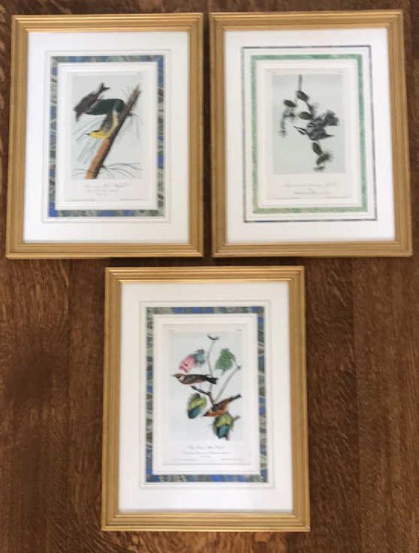GROUPING OF BIRD PRINTS