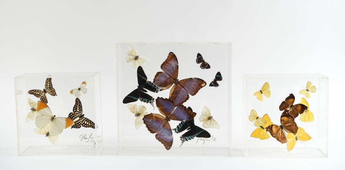 BUTTERFLY COLLAGE GROUPING