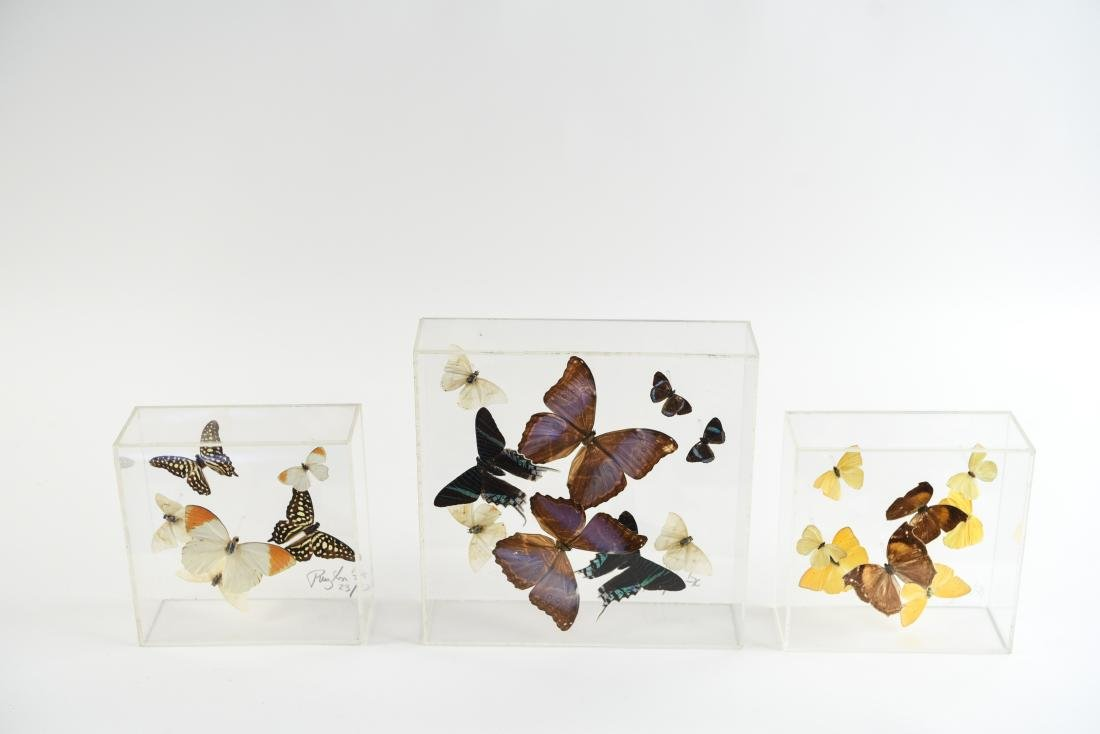 BUTTERFLY COLLAGE GROUPING - 2