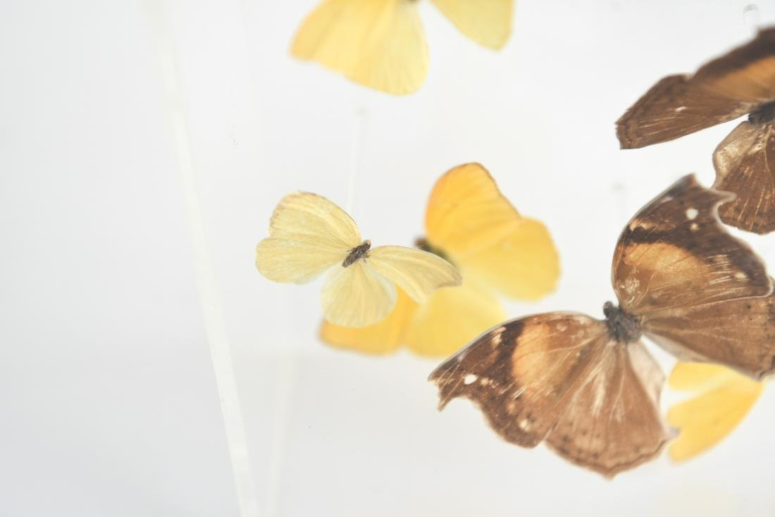 BUTTERFLY COLLAGE GROUPING - 5