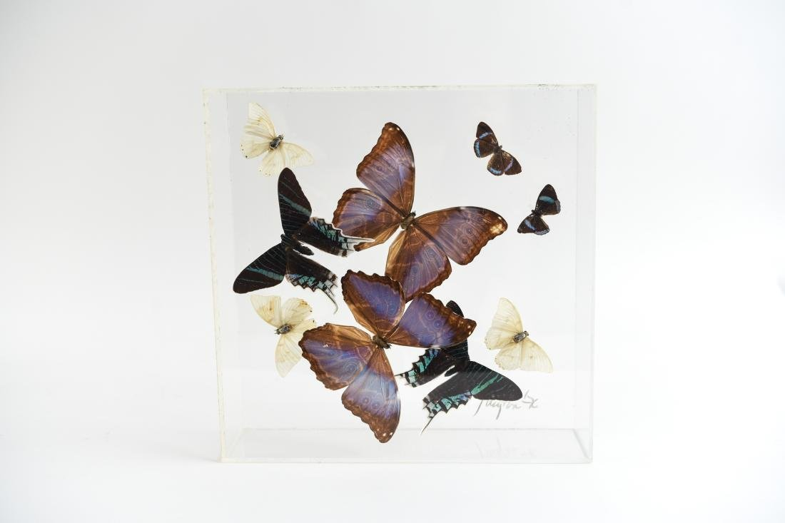 BUTTERFLY COLLAGE GROUPING - 8