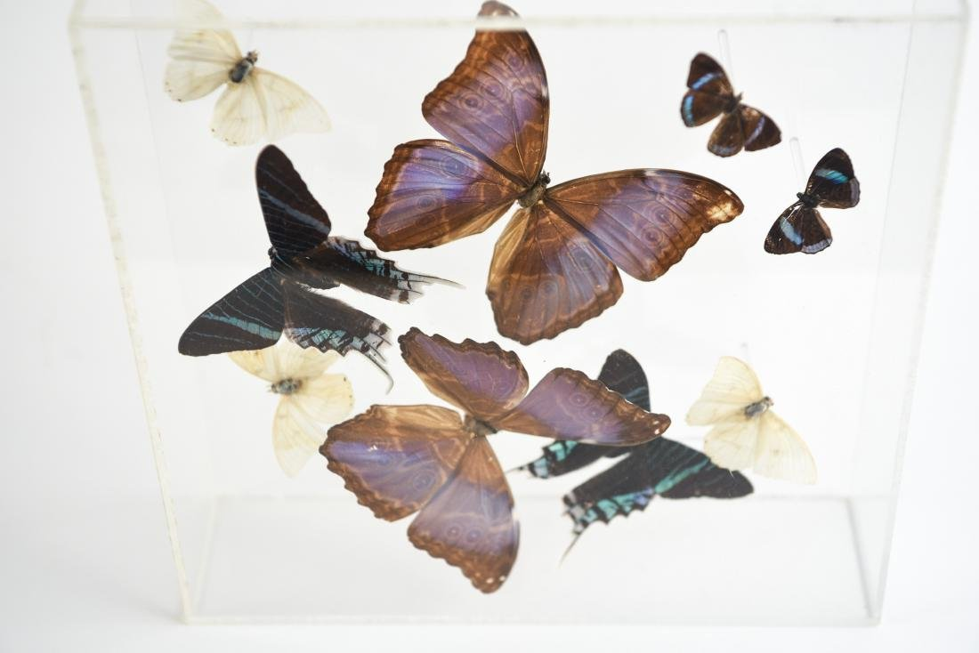 BUTTERFLY COLLAGE GROUPING - 9