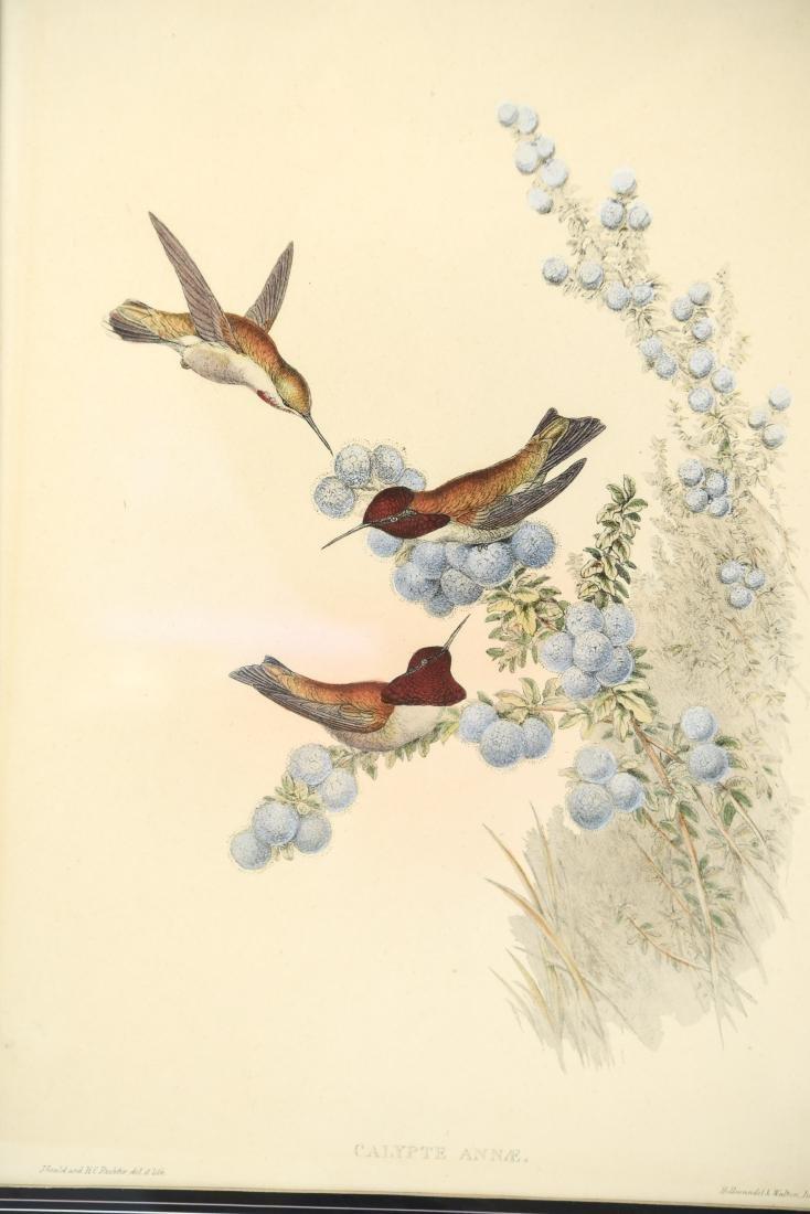 (4) BIRD PRINTS IN ORNATE FRAMES - 2