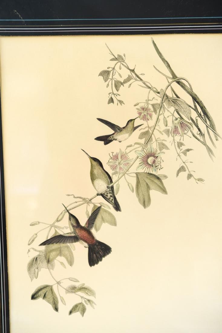 (4) BIRD PRINTS IN ORNATE FRAMES - 8