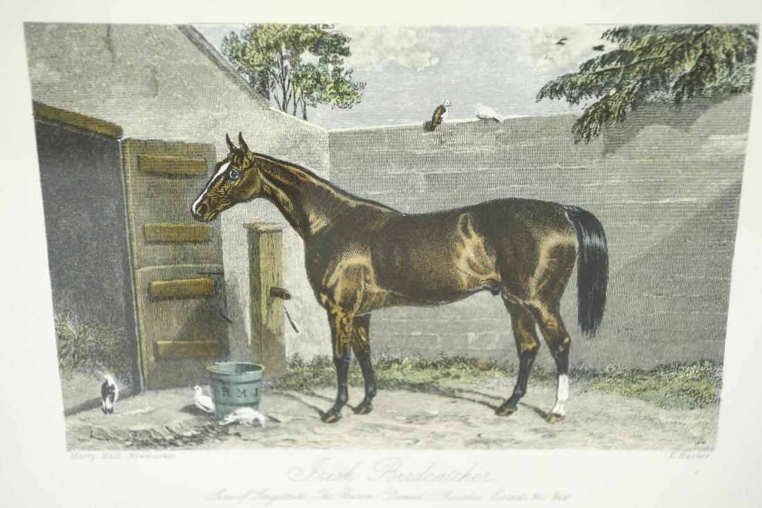 (2) ENGLISH HORSE PRINTS - 4