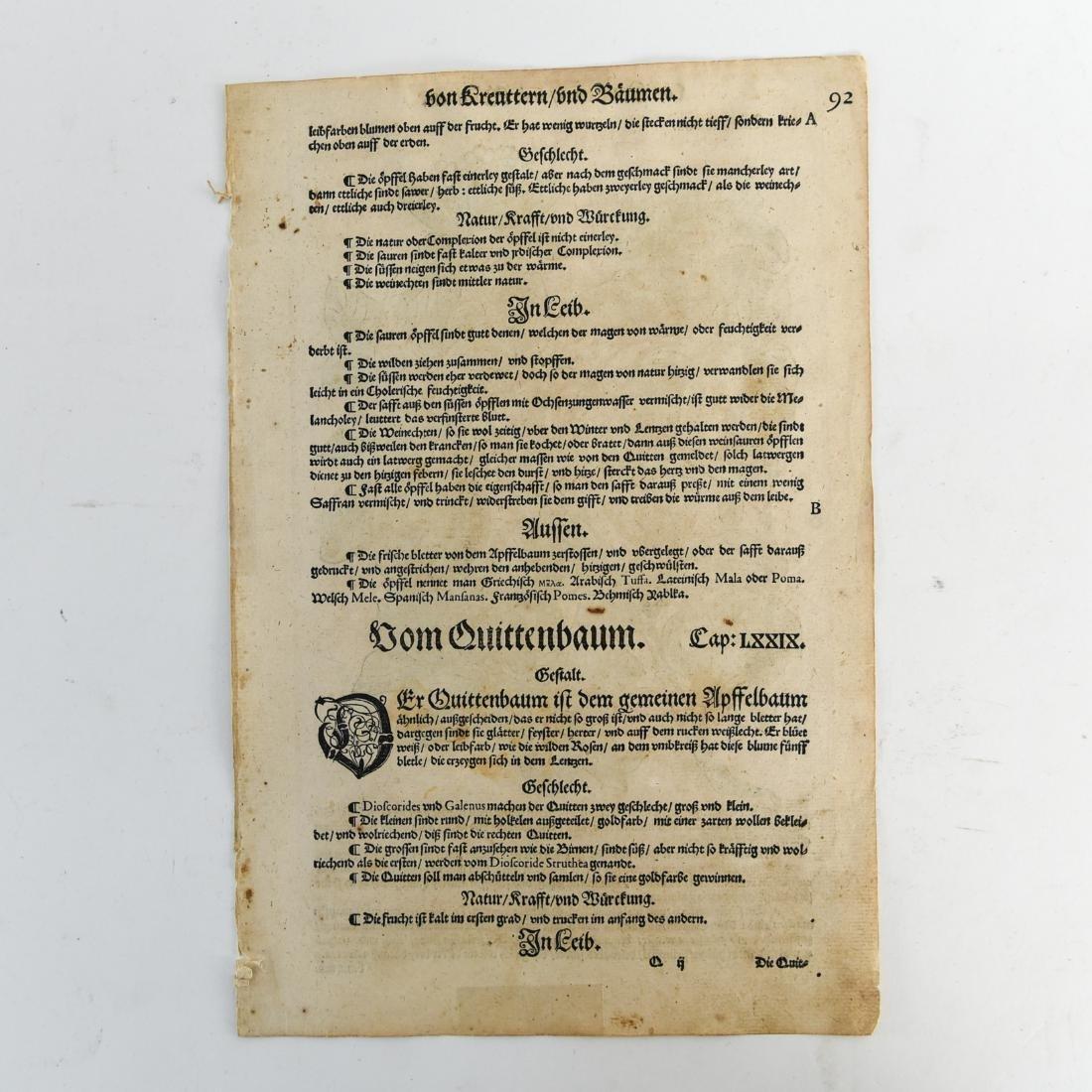 16TH CENTURY GERMAN WOODCUT OF APPLES - 5