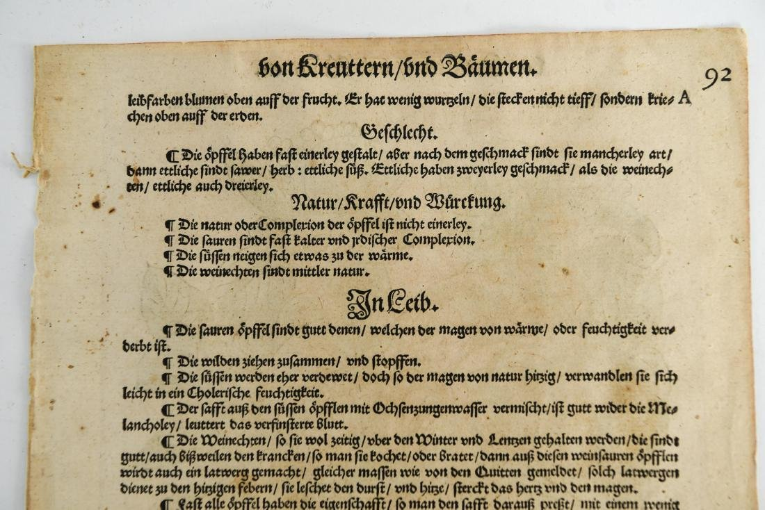 16TH CENTURY GERMAN WOODCUT OF APPLES - 6
