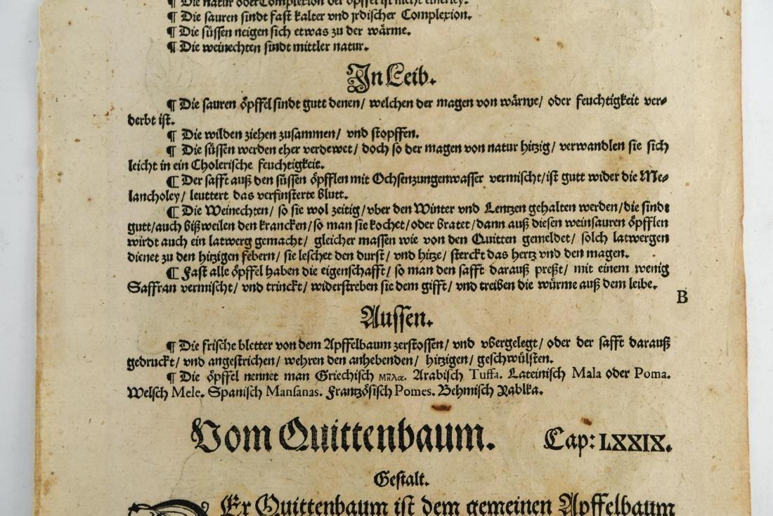 16TH CENTURY GERMAN WOODCUT OF APPLES - 7
