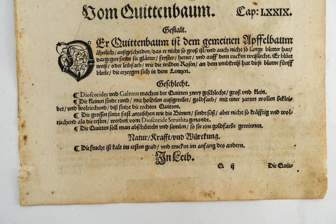 16TH CENTURY GERMAN WOODCUT OF APPLES - 8