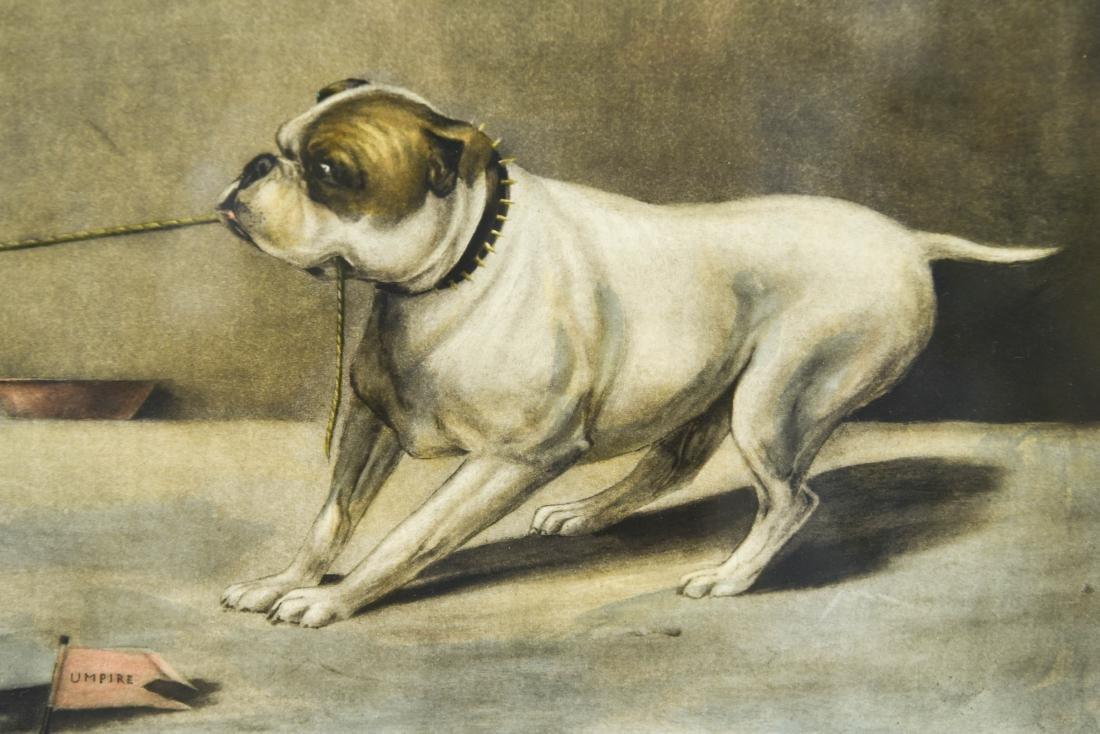 """1899 """"THE TUG OF WAR"""" DOG PRINT - 4"""