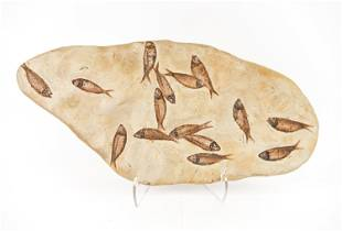 FOSSIL FISH SLAB SPECIMEN