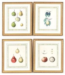 (4) 19TH C. COLOR LITHOGRAPH FRUIT PRINTS