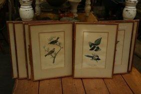 Audubon Engravings