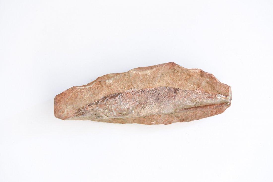 CRETACEOUS FISH FOSSIL