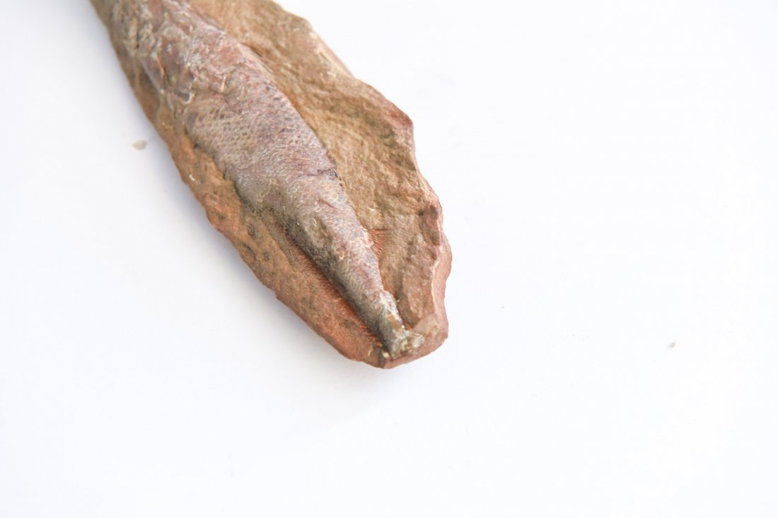CRETACEOUS FISH FOSSIL - 3