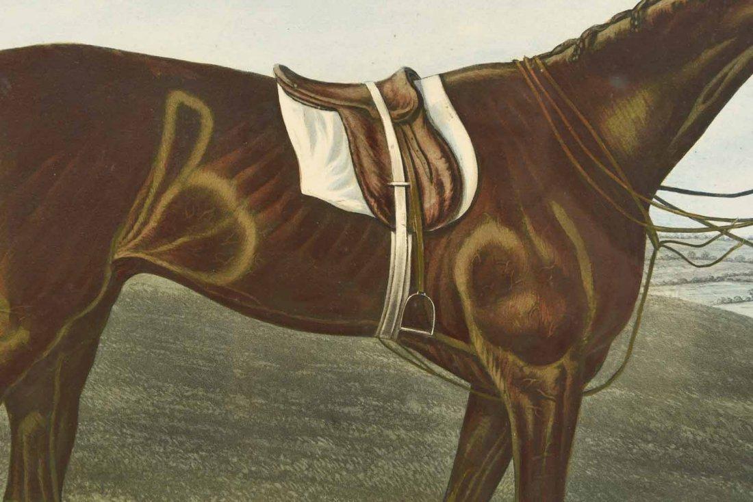 SKIRMISHER HORSE PRINT C.1850'S - 3