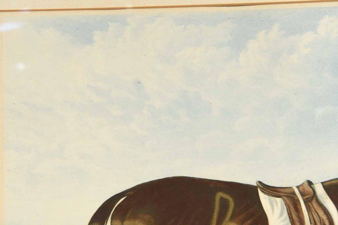 SKIRMISHER HORSE PRINT C.1850'S - 6