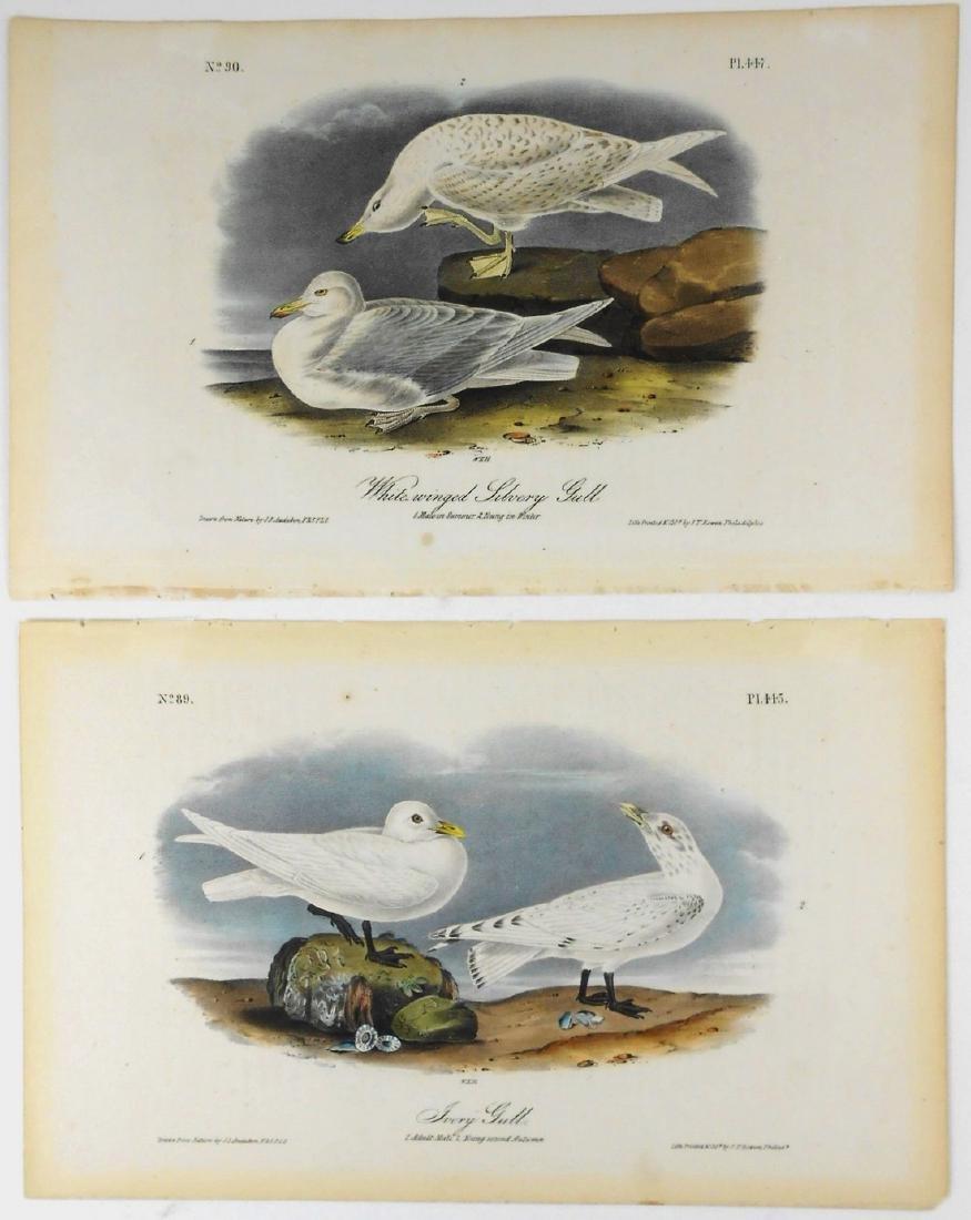 James Audubon Prints (2), 19th Century