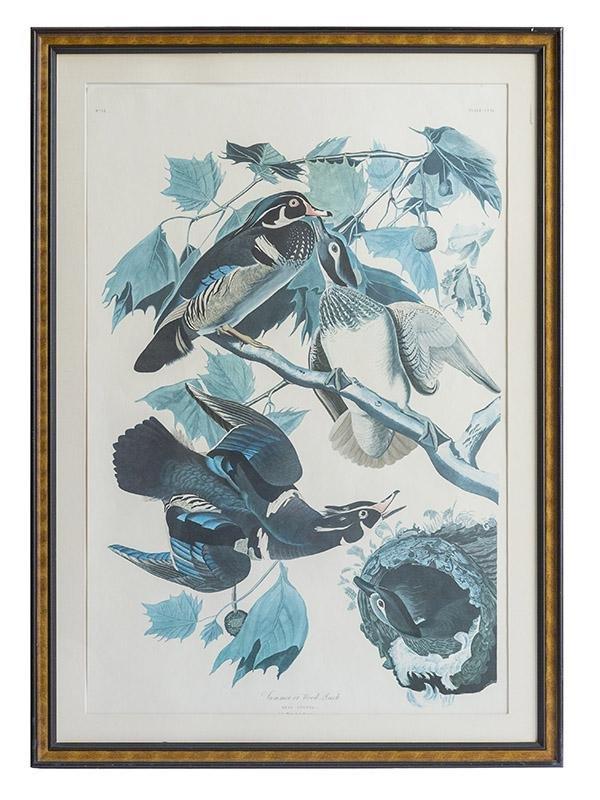 After John James Audubon (1785-1831) Lithograph