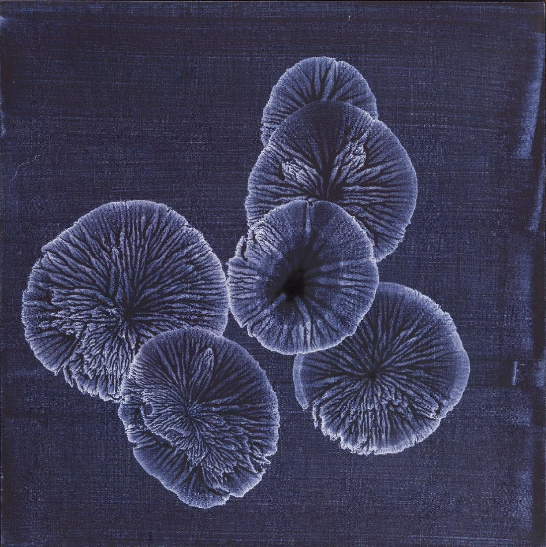 Rafal Bujnowski (b. 1974) Untitled (From Colonies