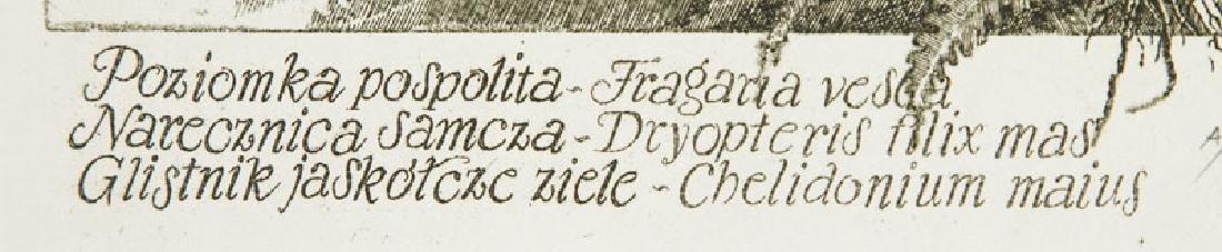 """Stanislaw Kluczykowski (b. 1937) """"a common Wild - 3"""