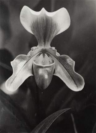 "Fortunata Obrapalska (1909 - 2004) ""Paphiopedilum"","