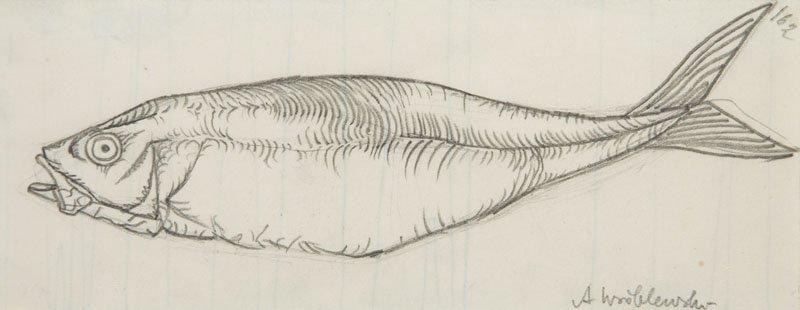 Andrzej Wroblewski (1927 - 1957),[Fish, Fish nr