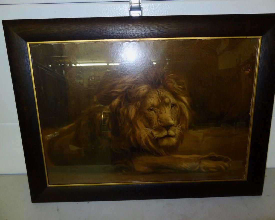 Large Lion Framed Print in Original Oak Frame