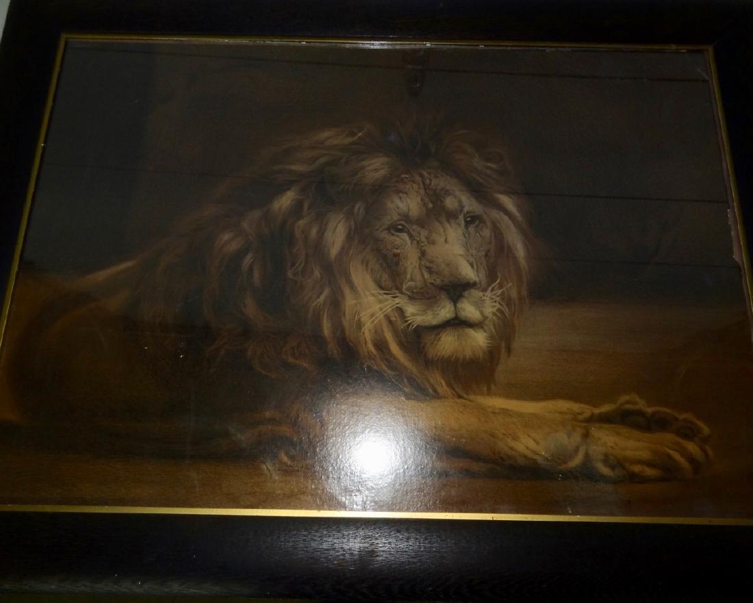 Large Lion Framed Print in Original Oak Frame - 3