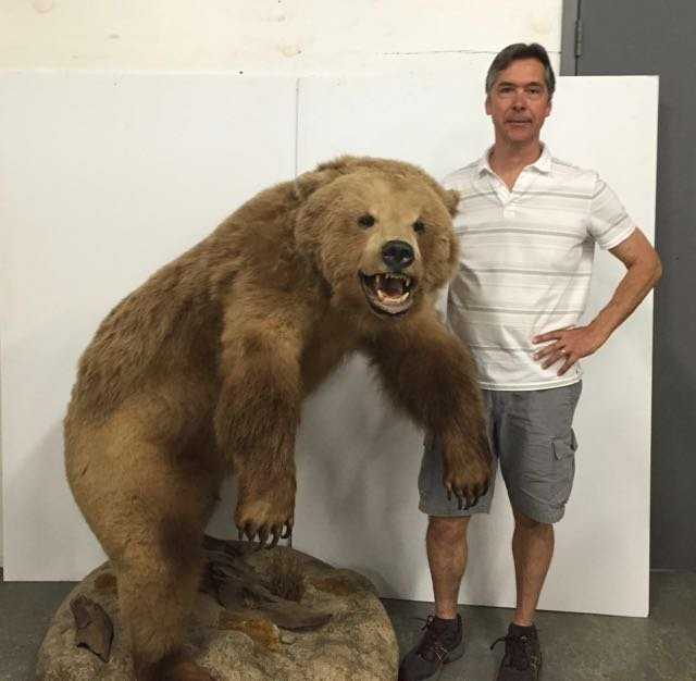 Mounted Alaskan Brown Bear - 3