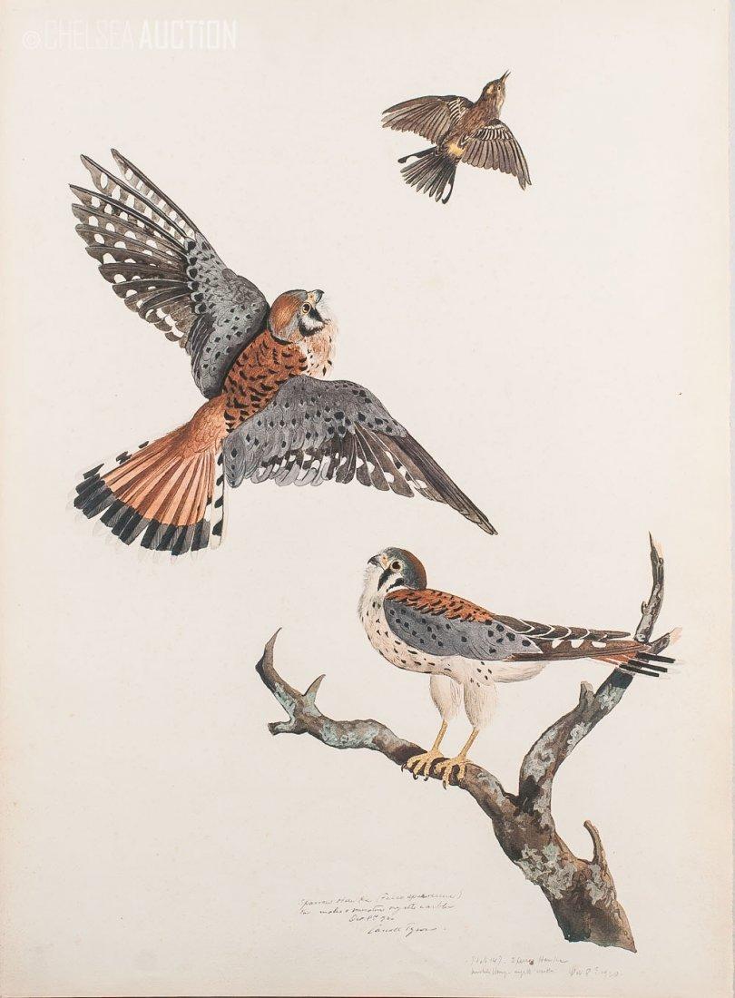 2: 1920 Color Print Birds on Island by Tyson