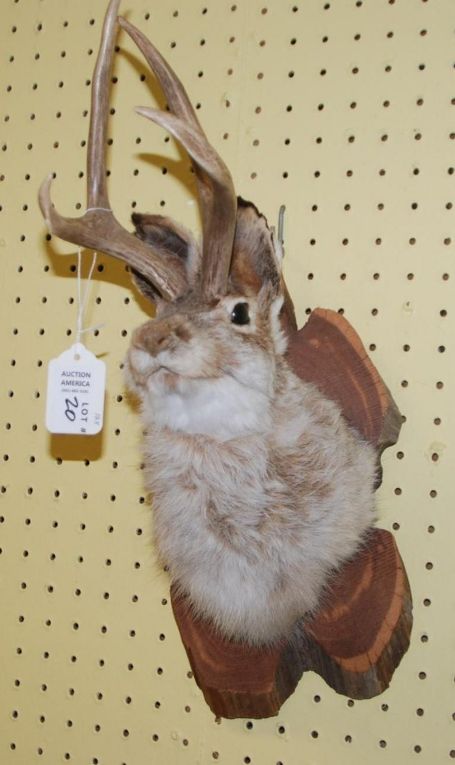 Mounted Hare with Deer Horns