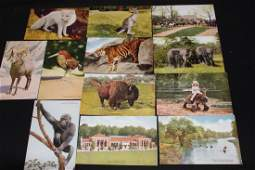 12 UNUSED NEW YORK ZOOLOGICAL PARK POSTCARDS IN GOOD