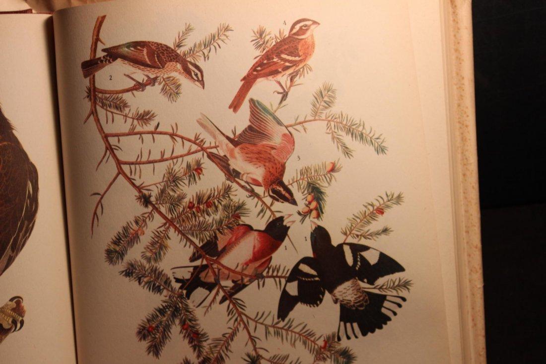 BIRDS OF AMERICA BY JOHN J AUDUBON 1944 ILLUSTRATED - 4