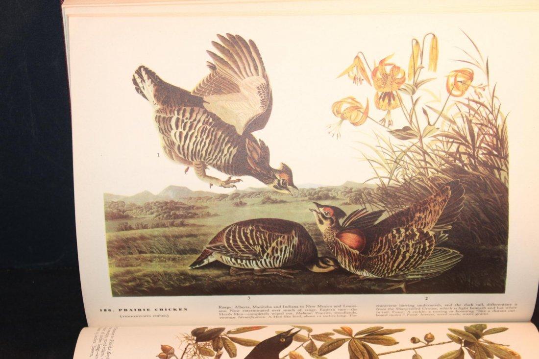 BIRDS OF AMERICA BY JOHN J AUDUBON 1944 ILLUSTRATED - 5
