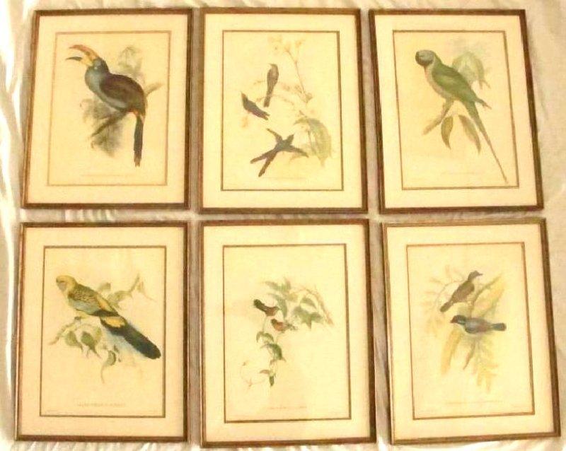 J Gould & HC Richter 6 Bird Lithographs