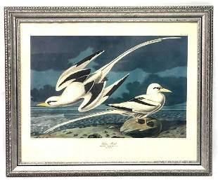 R Havell Framed Tropic Bird After John James Audubon