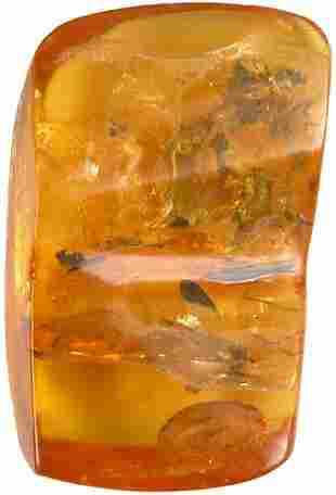 ANCIENT AMBER WITH INSECTS