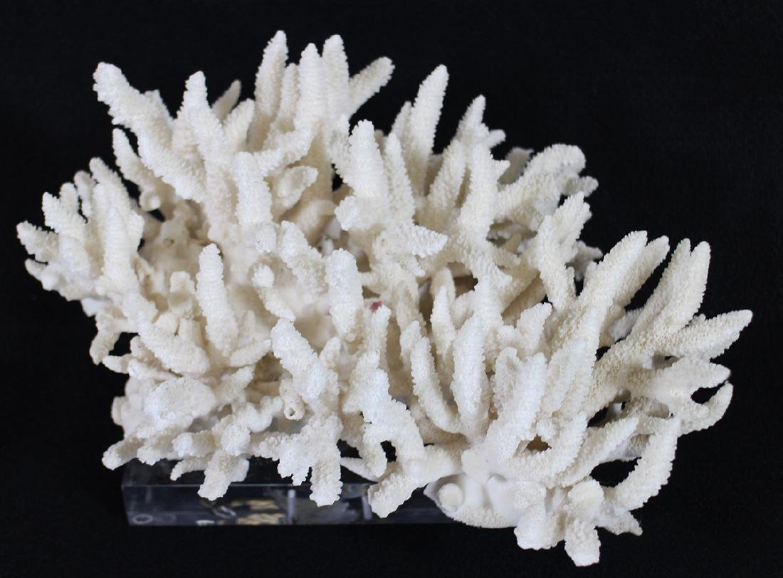 WHITE CORAL SCULPTURE ON LUCITE STAND - 2