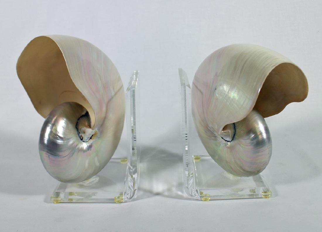 NAUTILUS SHELL BOOKENDS