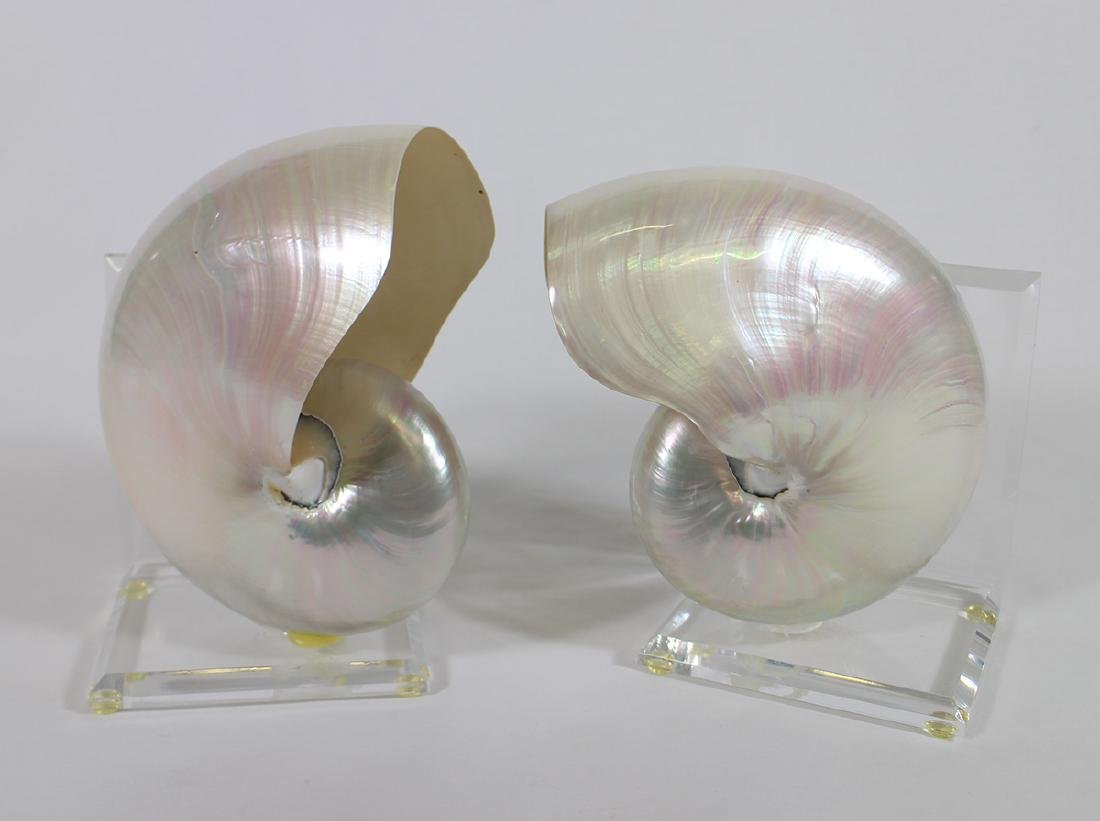 NAUTILUS SHELL BOOKENDS - 2