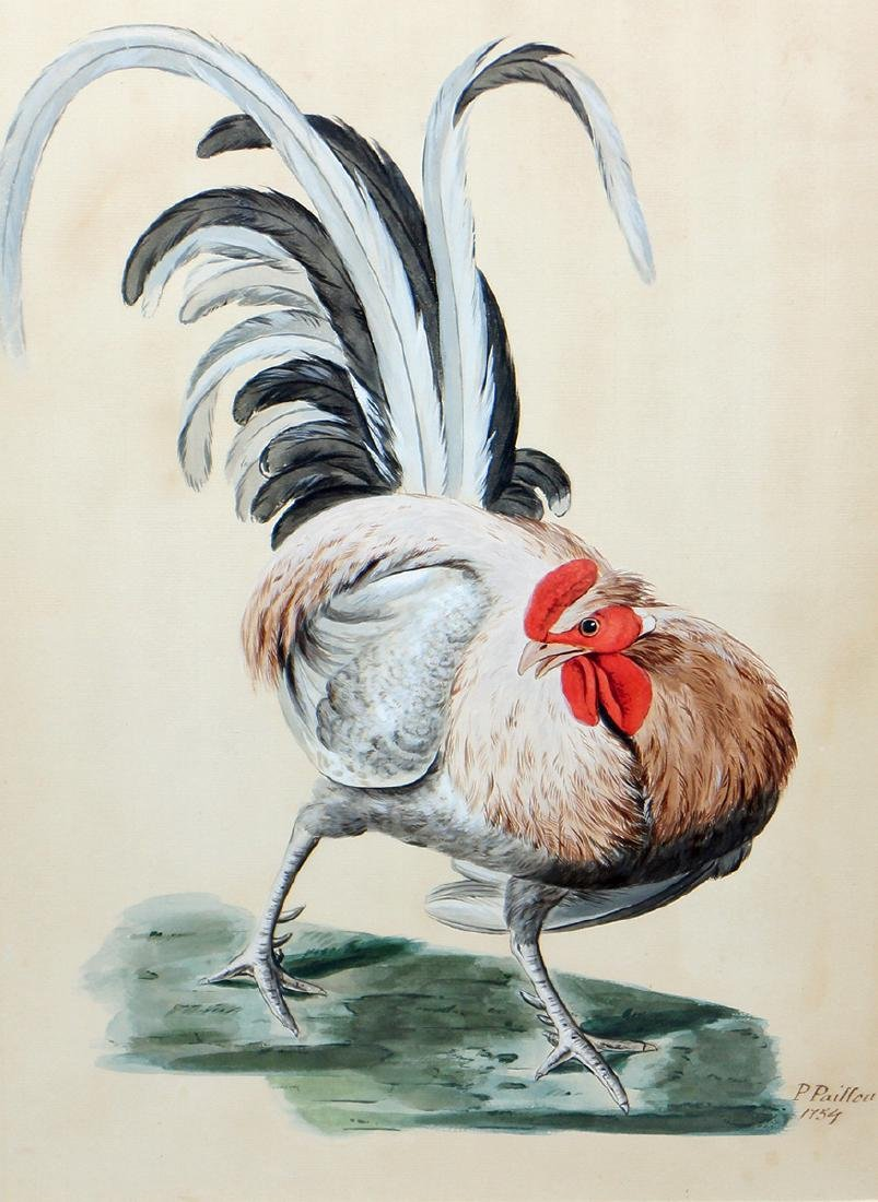 COCKEREL WATERCOLOR BY PETER PAILLOU
