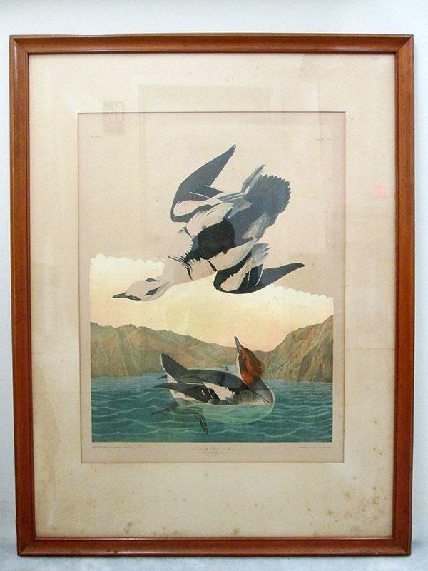 AUDUBON BIRD PRINT PLATE 441