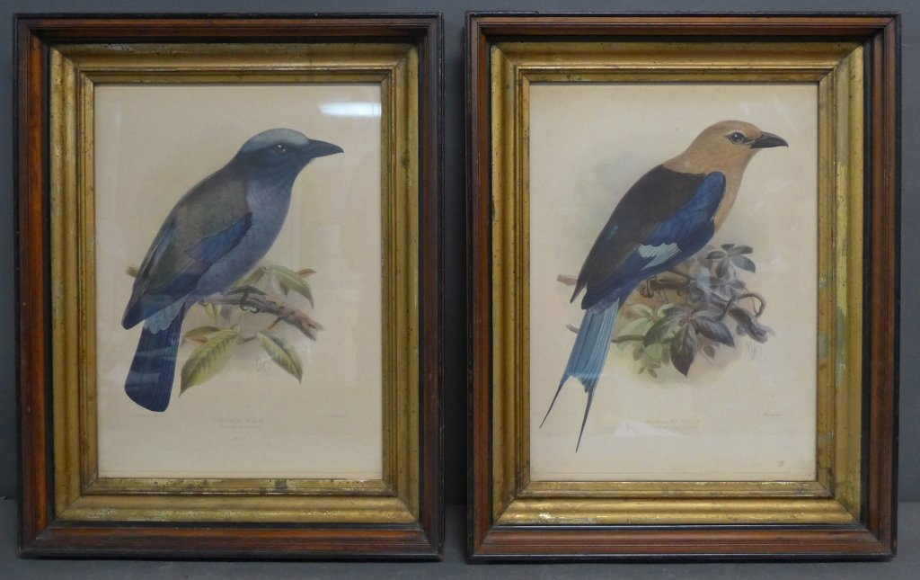 Pair Vintage Aviary Framed Lithographs