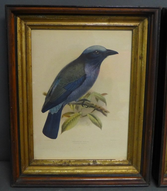 Pair Vintage Aviary Framed Lithographs - 2