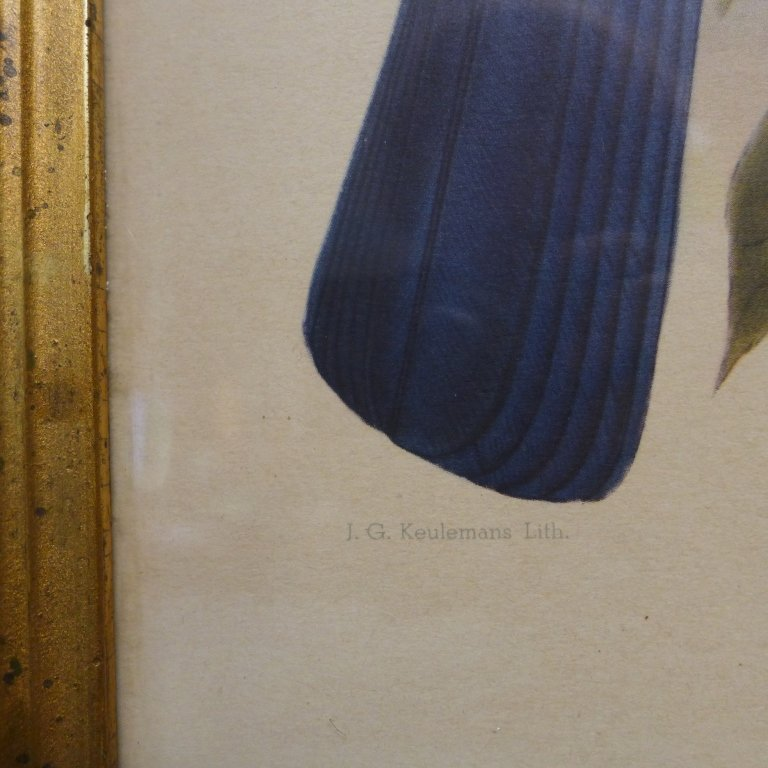 Pair Vintage Aviary Framed Lithographs - 5