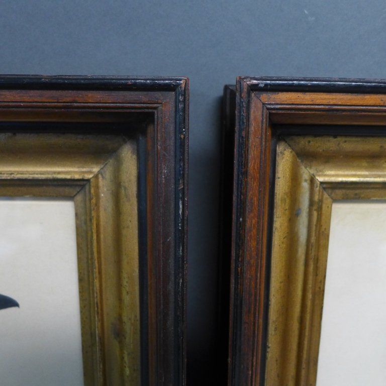 Pair Vintage Aviary Framed Lithographs - 9