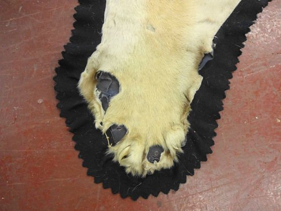 Vintage Tiger Skin Rug with Head & Paws - 3